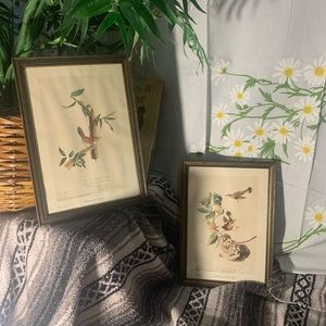 Birds of America by J Audobon set 2 lithographs